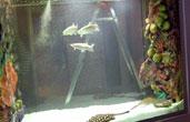 аквариум 1200 литров
