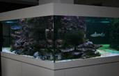 Морской аквариум на 5500 литров, шестигранник из 25-и мм. силикатного стекла.